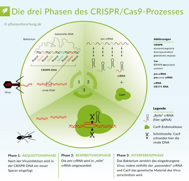 Neue Technologie CRISPR